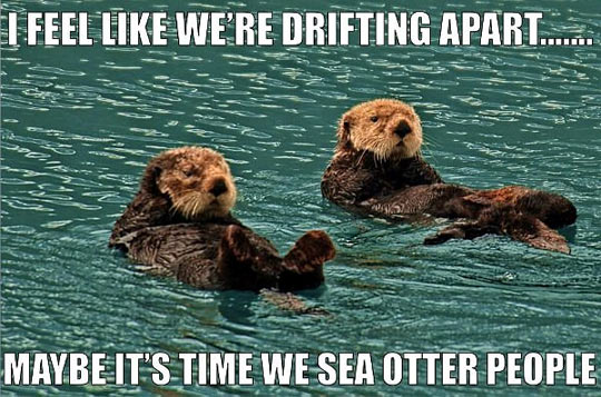 funny-sea-otter-swimming