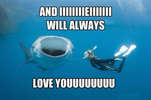 Whitney Houston whale shark…