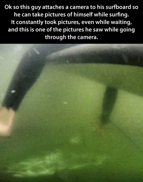 funny-shark-surfer-photo-scary