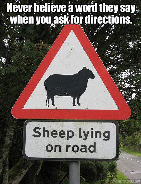 Sheep lying on the road…