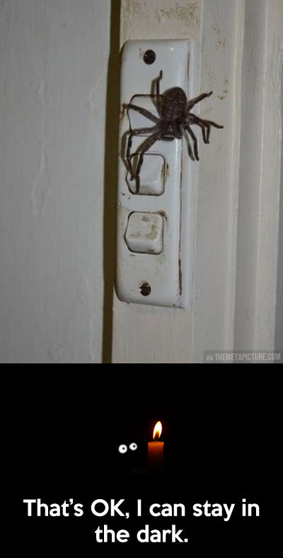 funny-spider-switch-light