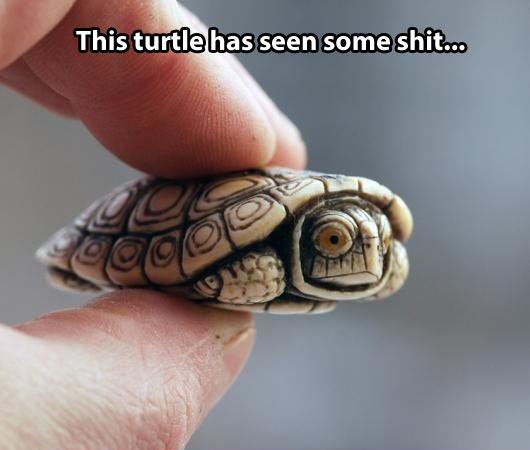 funny-surprised-little-turtle