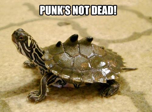 Punk's not dead…
