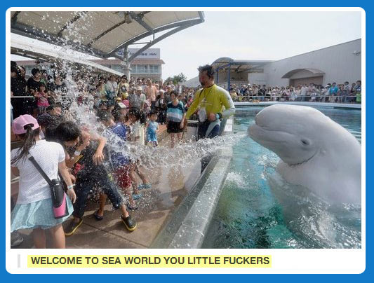 funny-welcome-whale-water-splash