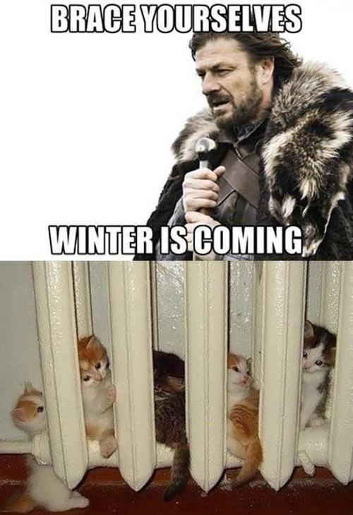 Brace yourselves kitties…