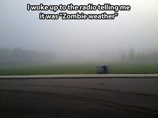 funny-zombie-weather-fog