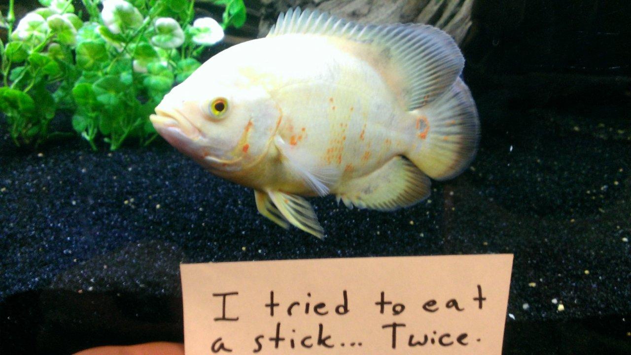 After Dog Shaming We Present You ?Fish Shaming? (10 Pics)