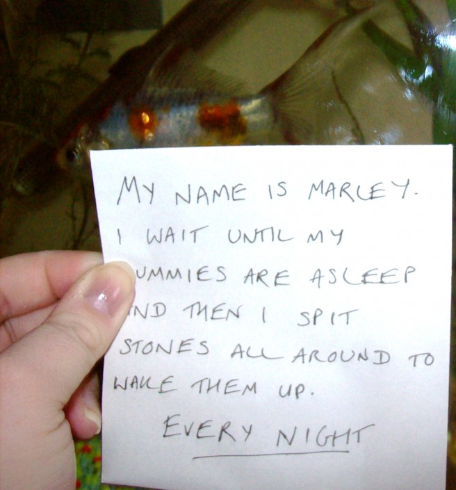 After Dog Shaming We Present You Quot Fish Shaming Quot 10 Pics