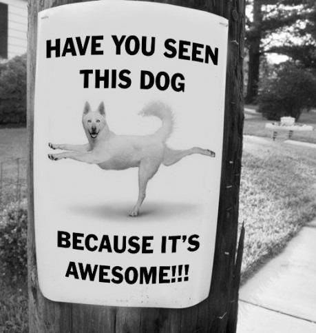 Funny Lost Pet Signs — 14