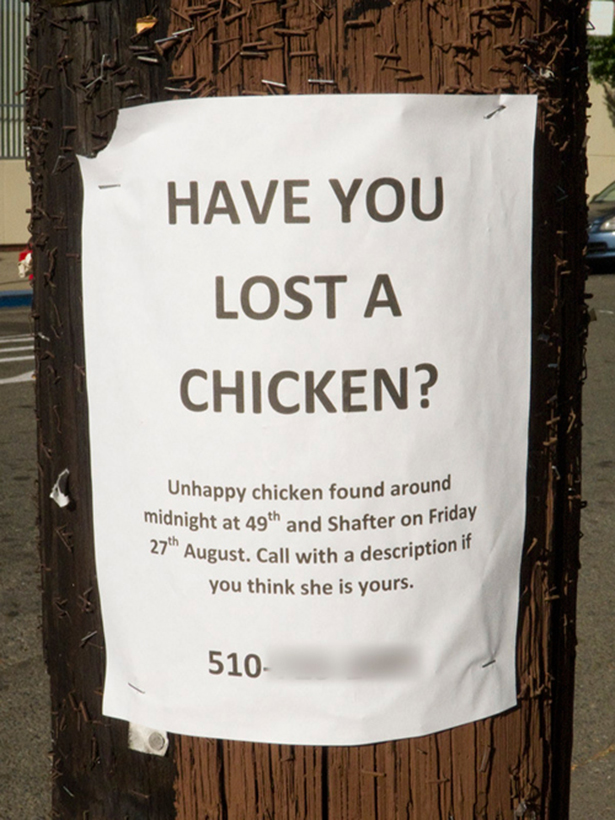 Funny Lost Pet Signs — 18