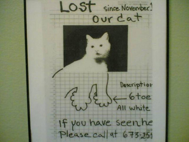 Funny Lost Pet Signs — 2