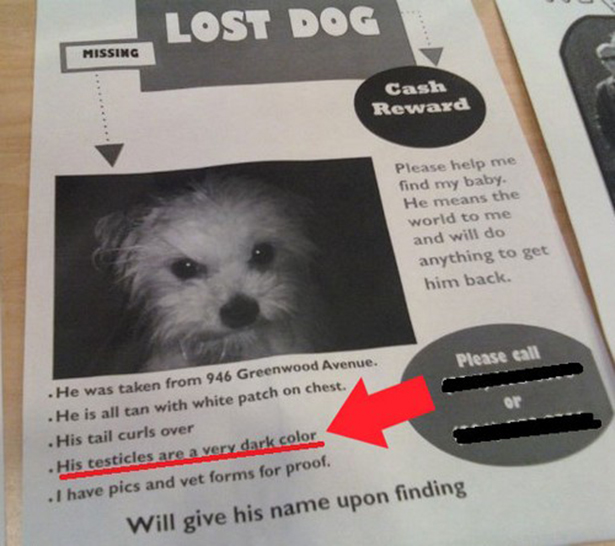 Funny Lost Pet Signs - 20 hilarious lost pet signs