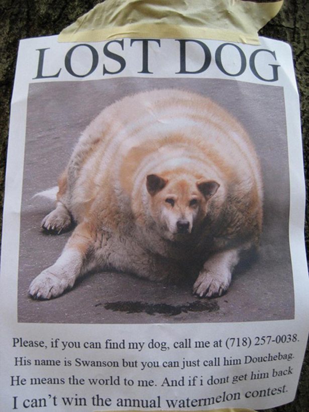 Funny Lost Pet Signs — 5