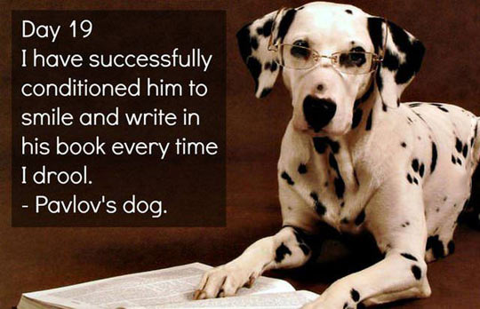 Pavlov Dog Name Pavlov 39 s Dog