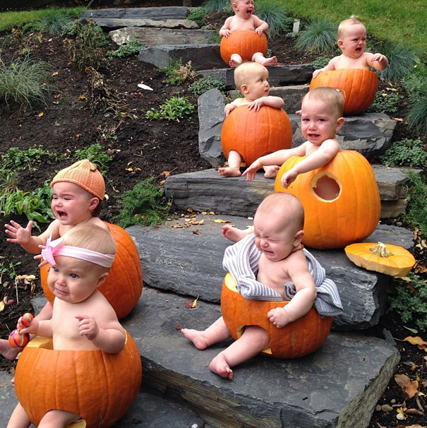 Reality - Babies in pumpkins.
