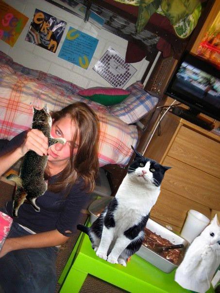 Replacing Booze With Kitties — 15