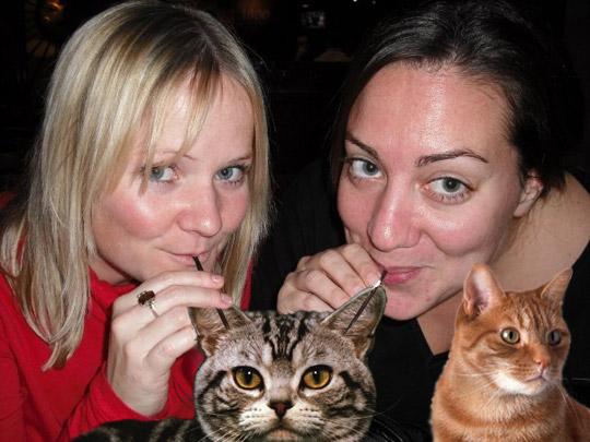 Replacing Booze With Kitties — 2