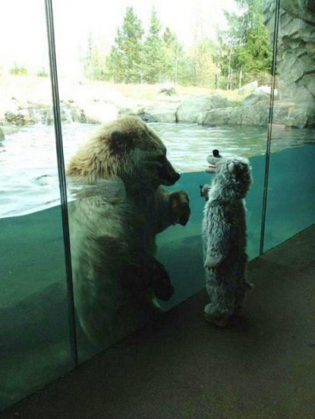 The bear looks so perplexed!