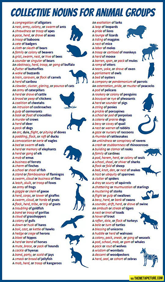 Cool Collective Nouns Animal Groups likewise Family Members additionally Mickey Mouse Clubhuis Kleurplaat further Tls also Toilet Paper Roll Elephant Craft Idea X. on animal families worksheets