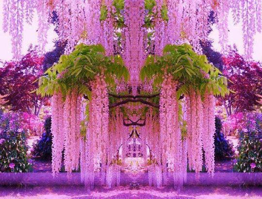 cool-garden-Japan-purple