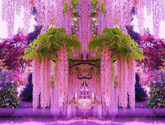 a purple wisteria flower garden in japan - Flower Garden