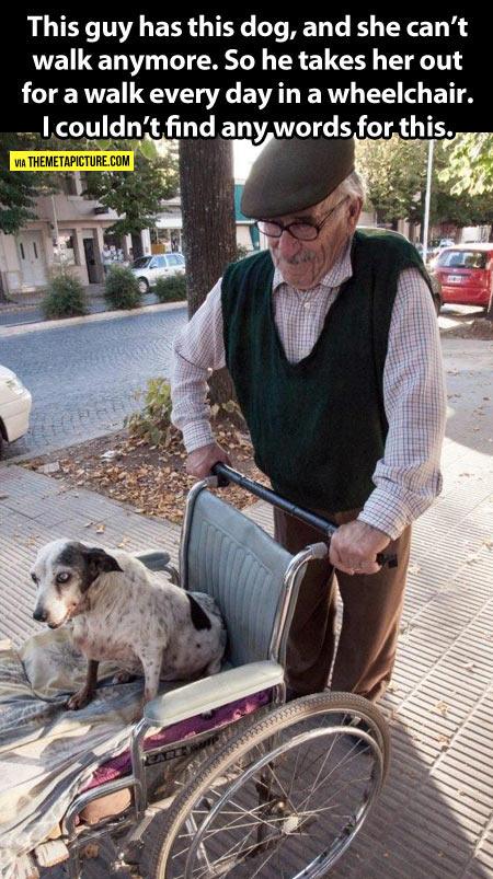 cool-old-man-walking-dog-wheelchair