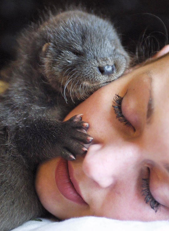 This is her significant otter…