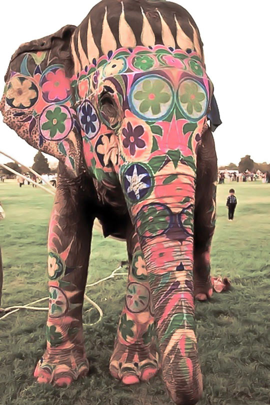cool-painted-elephant-flowers
