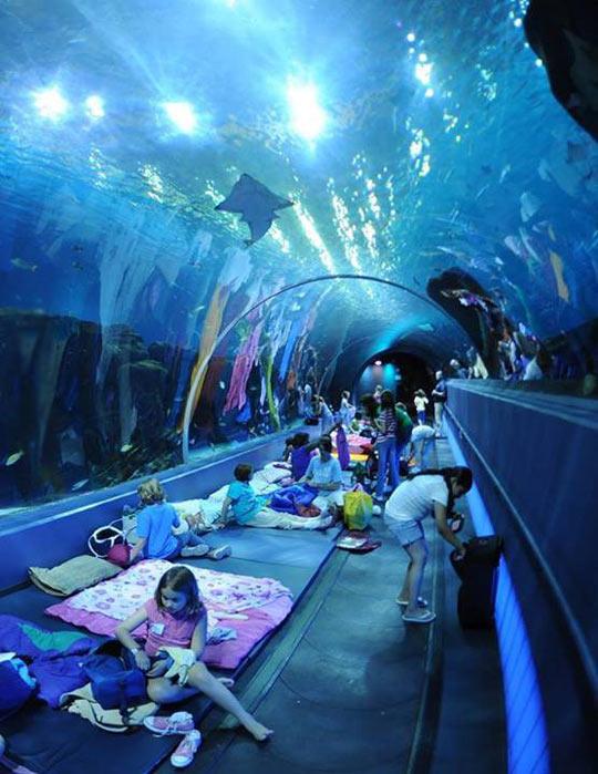 cool-sleepover-aquarium-sharks