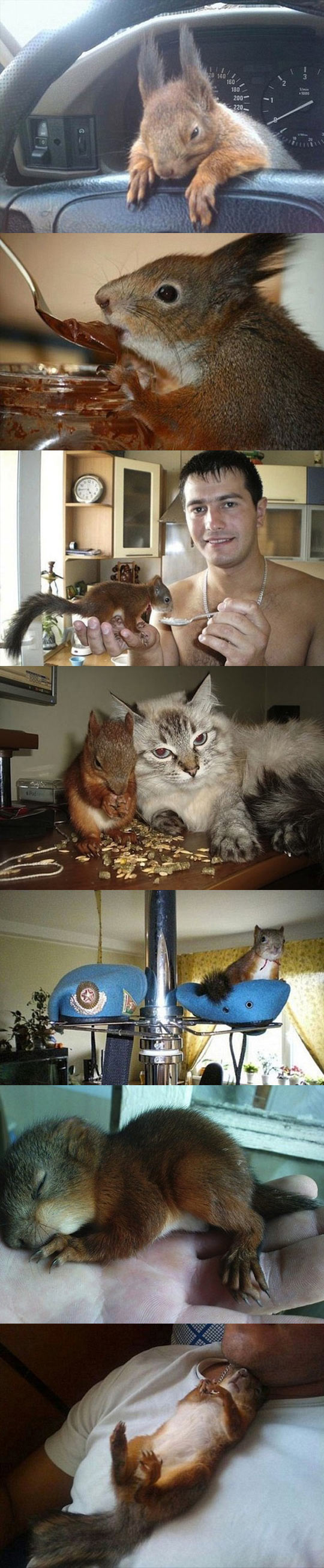cool-soldier-rescues-squirrel-friends