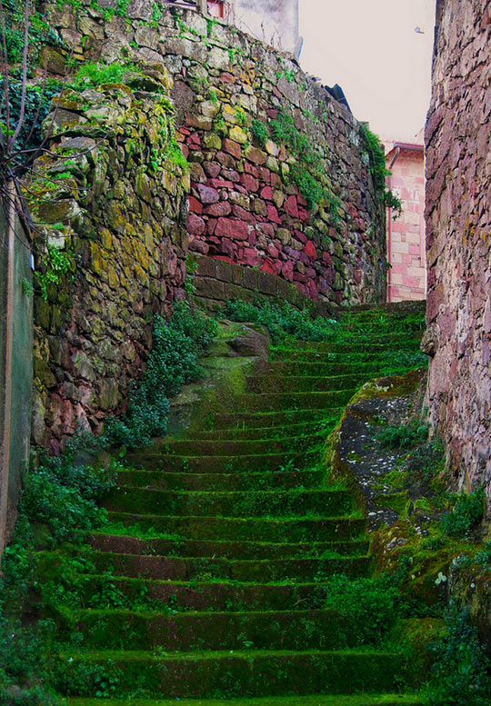 Beautiful moss covered staircase…