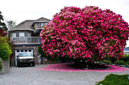 cool-tree-color-flowers