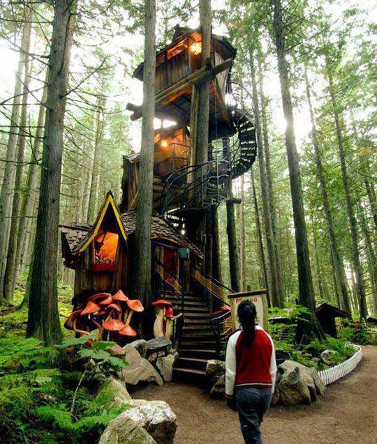 Multi-layered tree house…
