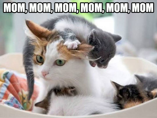 Mom, mommy, mom…