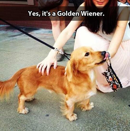 Golden Wiener…