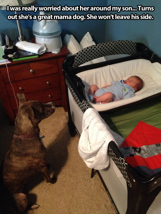 cute-dog-baby-protecting-side