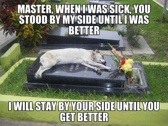 cute-dog-grave-master-side