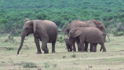 cute-elephant-family-reunited-all-together