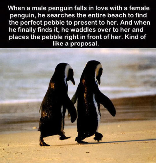 The way penguins do it…