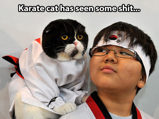 funny-Asian-cat-karate-suit