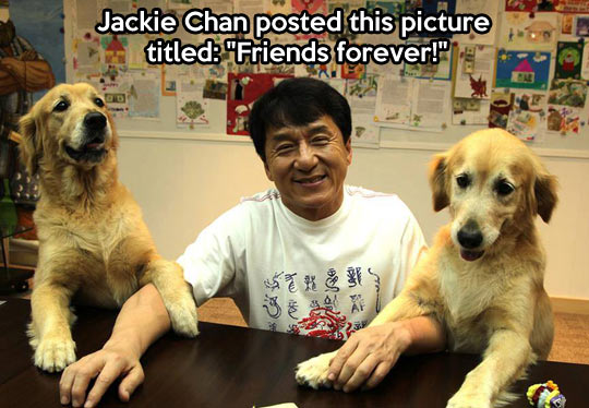 funny-Jackie-Chan-dogs-twins