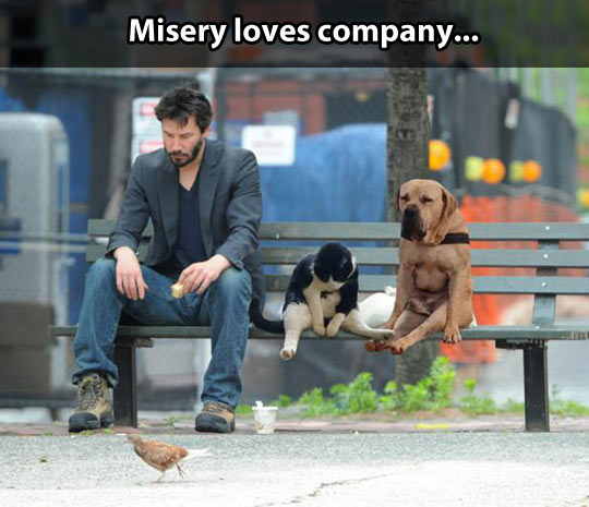 funny-Keanu-Reeves-bench-dog-cat-lonely