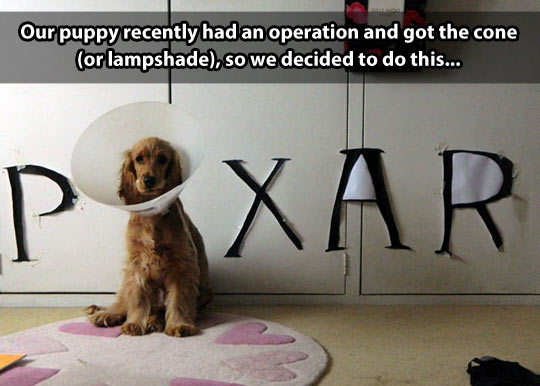 We made our own Pixar dog…