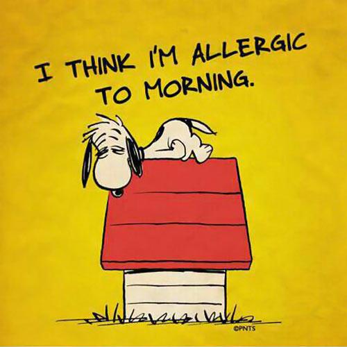 Worst case of allergies…