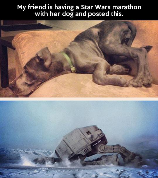 AT-AT dog fall…