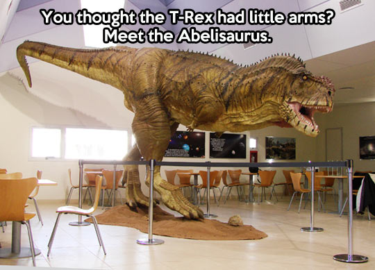 I present you the Abelisaurus…