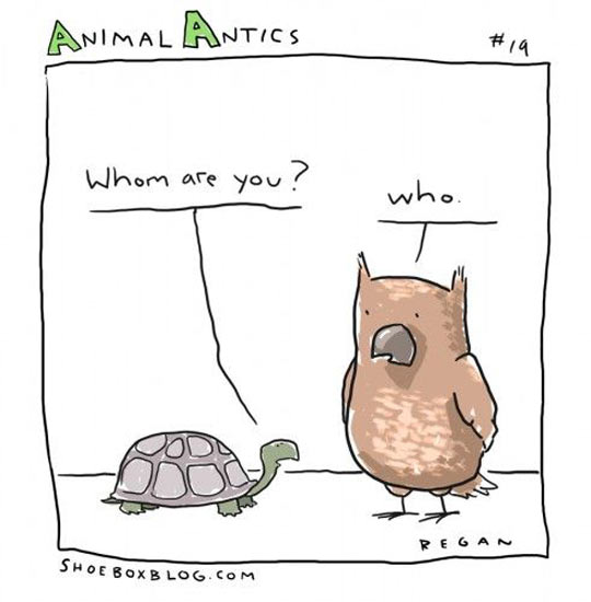 funny-animal-antics-owl-grammar