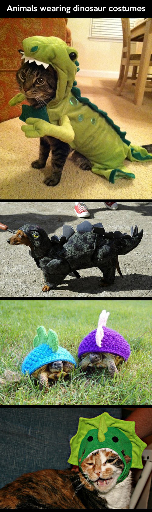 Animals wearing dinosaur costumes...