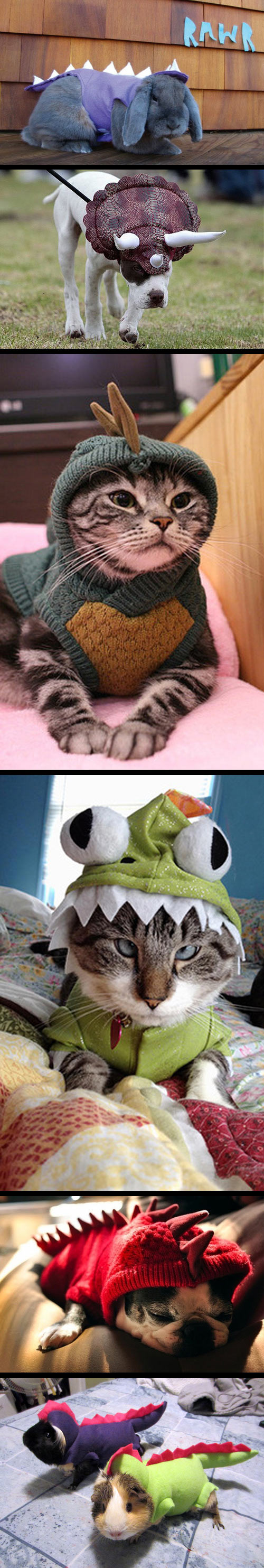 funny-animals-dinosaur-costumes-rabbit