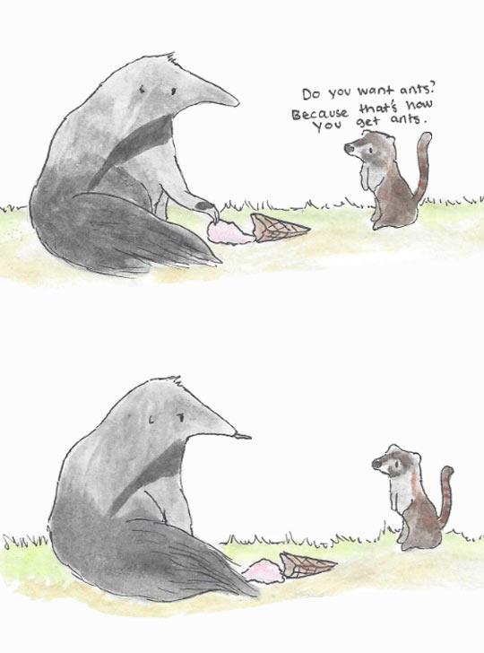 Misunderstood anteater…